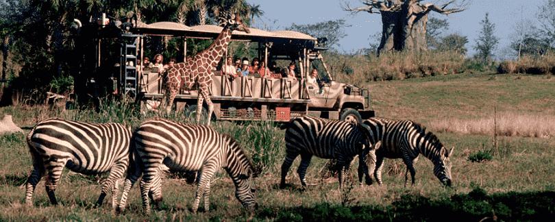 Disney Animal Kingdom safari