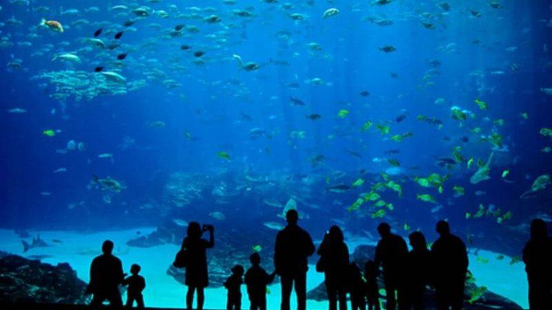 Visiting Miami Seaquarium: Florida's Best Aquarium