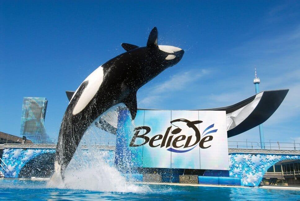 Whales at SeaWorld Orlando