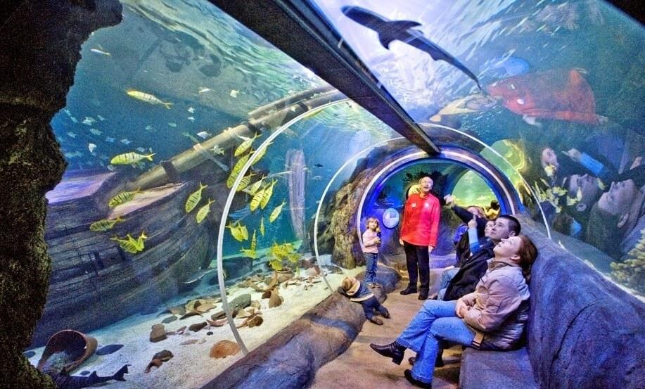 Sea Life Orlando Aquarium on I-Drive 360