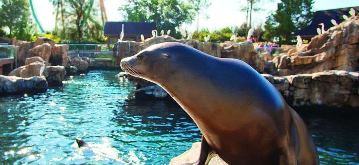 Sea lion at SeaWorld
